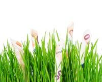 Euro che crescono sull'erba Fotografia Stock Libera da Diritti