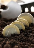 Euro coins grow from the ground. The concept of profit and business development royalty free stock images