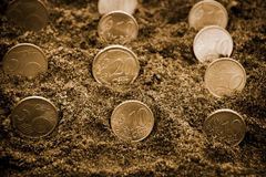 Euro coins growing from soil. Selective focus. Sepia toned. Stock Images