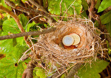 Euro Coins in the Nest Stock Images