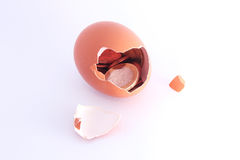 Euro coins sitting inside cracked hatched egg Stock Image