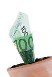 Euro-cuenta en crisol de flor. Tipos de interés, crecimiento. Fotos de archivo libres de regalías