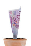 Euro currency in flowerpot. interest, growth. A euro-bill in flower pot. symbol rates, growth Stock Image