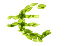 Euro currency symbol made of basil mint leaves. Euro currency symbol made of green basil mint leaves isolated on white studio background Royalty Free Stock Photo