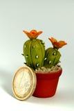Euro de cactus Photo libre de droits