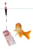 Euro e goldfish imagens de stock