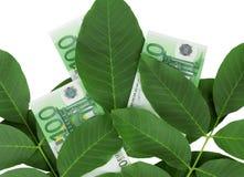 Euro en las hojas imágenes de archivo libres de regalías