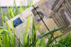 5 euro fattura che cresce nell'erba verde, concetto finanziario di crescita Fotografia Stock