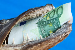 Euro in fish mouth Stock Photo