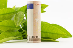 Euro with green leaves Stock Photography