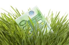 Euro Growth. Close-up of 100 Euro in a fresh green grass.Studio isolated royalty free stock photo