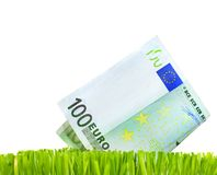Euro Growth. Close-up of 100 Euro in a fresh green grass.Studio isolated stock image