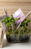 Euro in het groene gras Stock Afbeeldingen