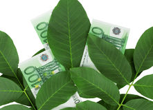 Euro in the leaves Royalty Free Stock Images