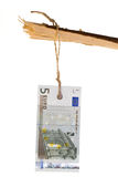 euro markering 5 op tak Stock Foto's