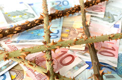 Euro money banknote with rose thorns Royalty Free Stock Photos