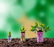 Euro money growth on trees. Blurred background Stock Photo