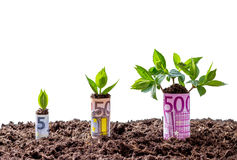 Euro money growth on trees. Isolated background Royalty Free Stock Photos