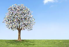 Euro Money Tree Stock Photography