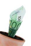 Euro-note dans le bac de fleur. Taux d'intérêt, accroissement. Photos libres de droits