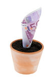 Euro-note In Flower Pot. Interest Rates, Growth. Stock Photos
