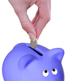 Euro and  piggy bank Stock Images
