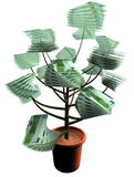 Euro Plant. 3d isolated plant of hundred euro on white background Stock Images