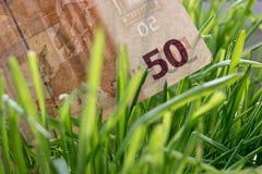 50-Euro - Schein, der im grünen Gras, Finanzwachstumskonzept wächst Stockfotografie
