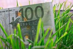 100-Euro - Schein, der im grünen Gras, Finanzwachstumskonzept wächst Stockfotos