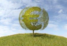 Euro sign on a tree Royalty Free Stock Photos