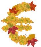 Euro symbol. Of autumn leaves Royalty Free Stock Image