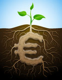 Euro teken zoals wortel van installatie Royalty-vrije Stock Foto