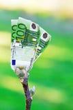Euro tree Royalty Free Stock Photos