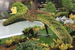 Euroflora 2011 - Fleurs dans l'exposition Photo libre de droits
