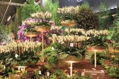 Euroflora 2011 - Flores en la demostración Fotografía de archivo libre de regalías