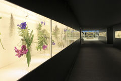 Euroflora 2011 - Flowers in show royalty free stock photos