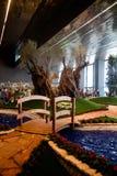 Euroflora 2011 - oude olijfbomentweelingen Stock Afbeelding