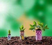 Eurogeldmengenwachstum auf Bäumen stockfoto