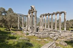 Euromos, Aegean Turkey. The Temple of Zeus at Euromos is to me the perfect ruined Greek temple.  Set in a forest of olive trees just east of the D525 highway Stock Photos