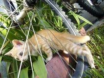 Europäercommon-Katze Lizenzfreies Stockbild