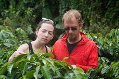 Europäische Paare auf Kaffeeplantage in Costa Rica stockbild