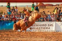 Europäische Rodeo-Meisterschaft Stockbilder