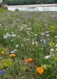Europäische wilde Blumen in der Flussufereinstellung Stockfoto