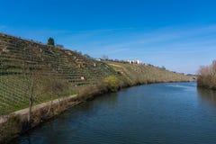Europäischer Fluss Max Eyth See Stuttgart Vineyards Sunny Landscape lizenzfreie stockfotos