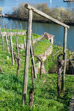 Europäischer Fluss Max Eyth See Stuttgart Vineyards Sunny Landscape stockfotografie