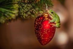 Europäischer grüner Baumfrosch, Hyla arborea früher Rana, arborea auf einem roten Weihnachtsspielzeug stockfotos