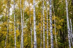 Europäischer Herbst Stockfotos