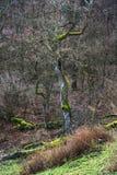 Europäischer Laubwald Stockfoto
