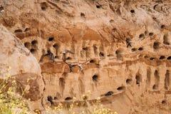 Europäischer Sand Martin Active Breeding Colony Near Burrows in der Sand-Fluss-Küste Stockbilder