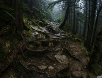 Europäischer Wald Lizenzfreies Stockbild